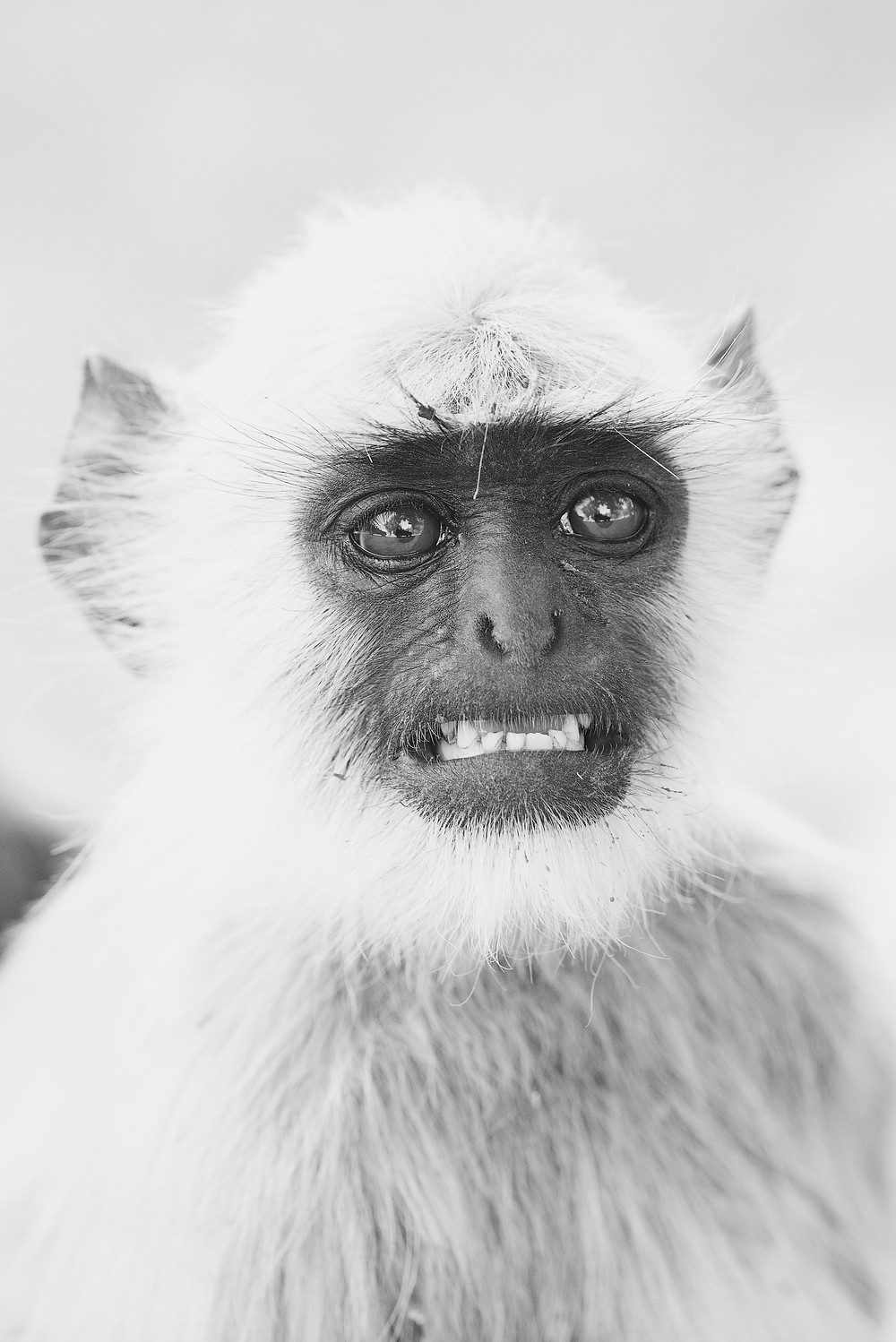 A picture of a monkey.