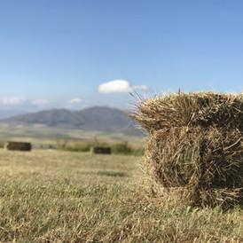 איכות תזונתית של חציר לסוסים: מה אנחנו צריכים לדעת לעתיד?