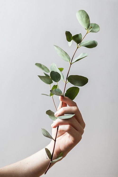 Eucalyptus (Vicks)