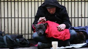 Botoșani: O persoană fără adăpost a predat Poliției o sumă importantă găsită la gunoi