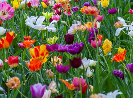 Spring - What's special about it?