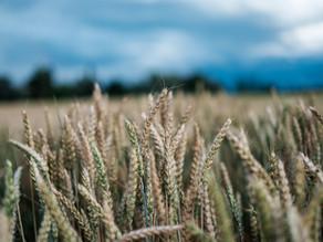 Qube acquires Newcastle grain facility