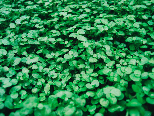 Living Green!