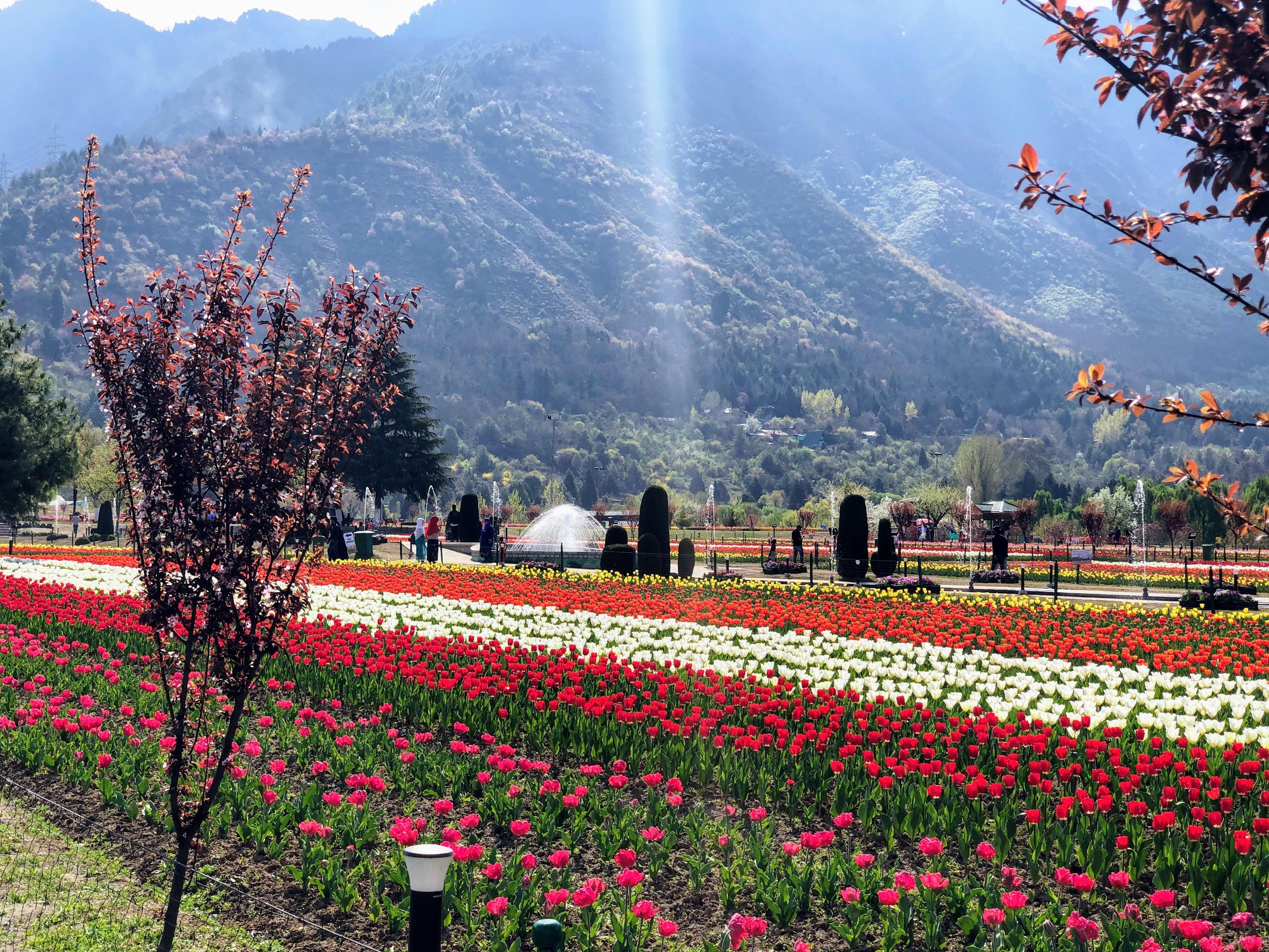 Shalimar Gardens Srinagar