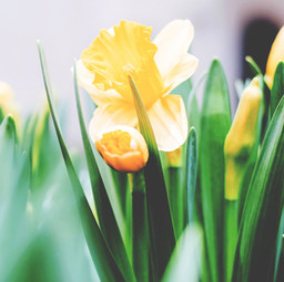 A Covid Winter and the Spring Hope of the Gospel