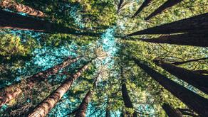 Peers plug green recovery