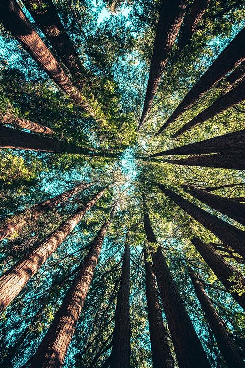 Kapuna Healing System - Earth Based Wisdom, Sacred Knowledge & Spiritual Growth