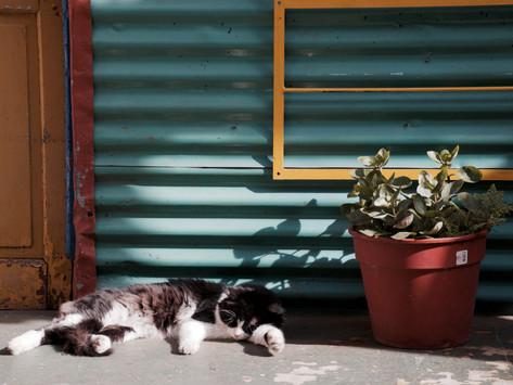 怠け癖を乗り越えるための不変のルール