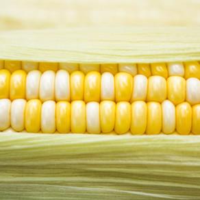 Corn on the cob by Nora Blascsok