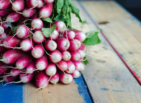 Garden Experiment: Radishes Rule