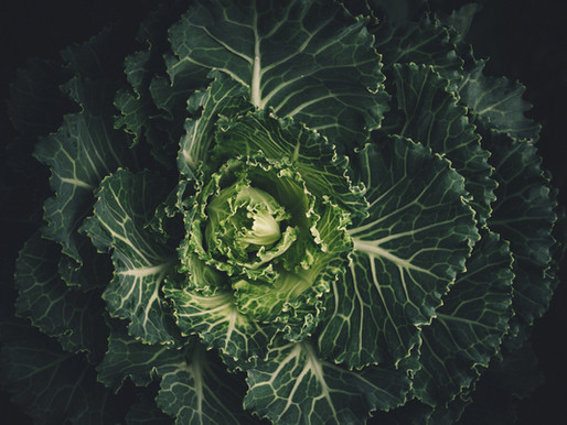 How to Grow Napa (Chinese) Cabbage