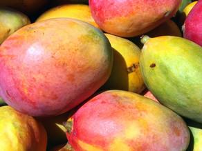 Mangos make the best Salsa