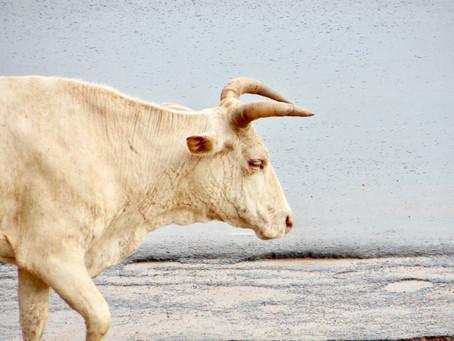 Wall Street Bulls may soon be Proven Wrong
