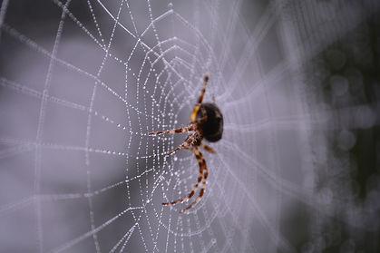 Spider control in Temecula