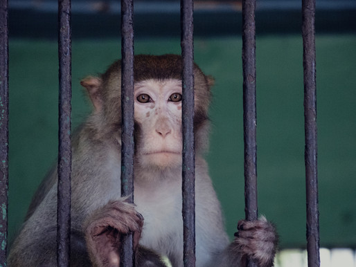 Roadside Zoo keeper shares horrific memories of animal neglect at Special Memories Zoo