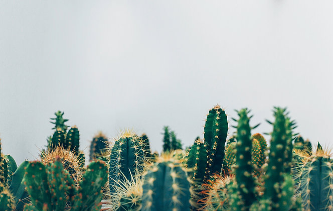 Cactus and Succulent Workshop - On Hold Due To Covid19