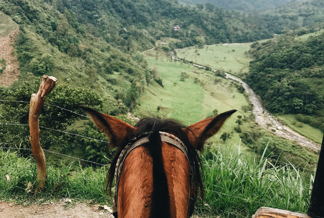 Pferd hat eine Aussicht auf die Kaffeeregion