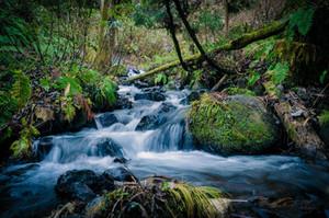 "Sermon: ""Water and Wilderness"""