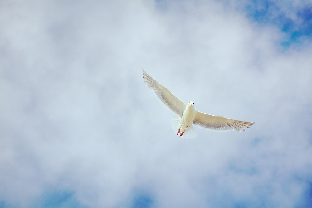 dove flying in the sky peace