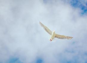 Prière pour être conduits par le Saint-Esprit