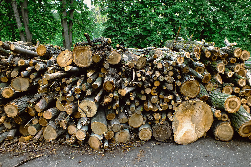 stack of lumber trees cut down