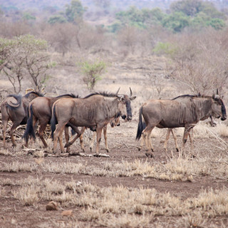 Botswana | Safari