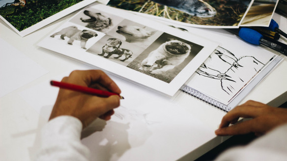 Drawing: Animals