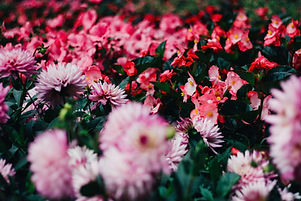 Image of flowers by Paco S