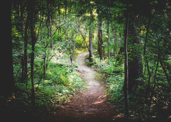 Inspiration for nature trail 3