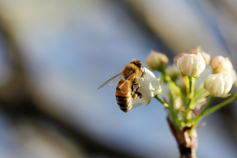 #SaveTheBees with bee-friendly gardens