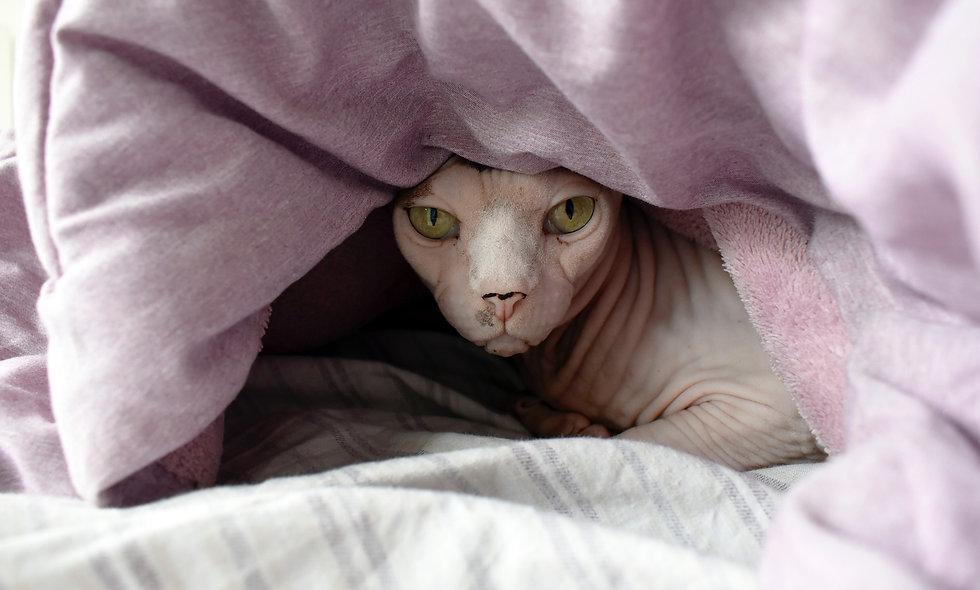 Одеяла, пледы, полушерстяные, ватные, на синтепоне, синтетические, холофайбер
