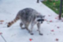 Nuisance wildlife ohio