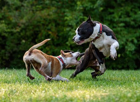 Ha félreérted, támad – ismét a kutyatámadásokról
