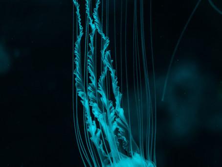 Bioluminescence-The Glowing Phenomenon