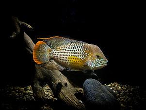 Image by Cofish Aquarium