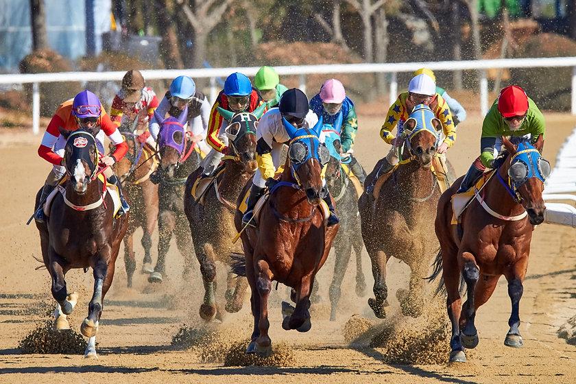Pine Shavings Horse Racing