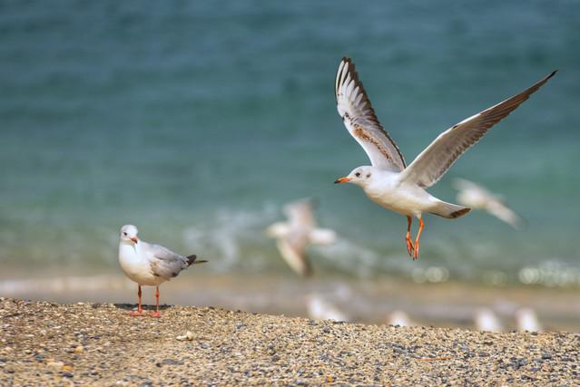 Image by Awf Al Shehhi