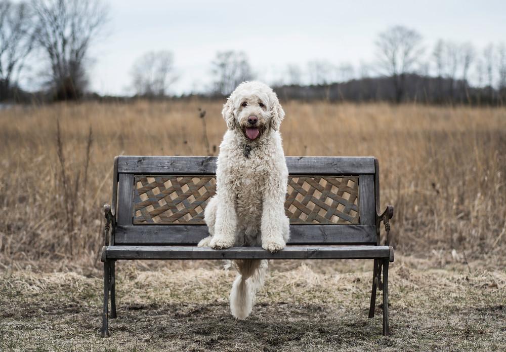 Puppy op bankje
