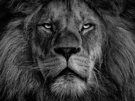 Lion Shit & The Willpower Myth