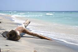 Earthy Naturals Summer Heat