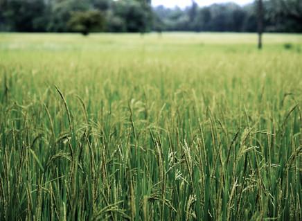 Think upstream on pesticides