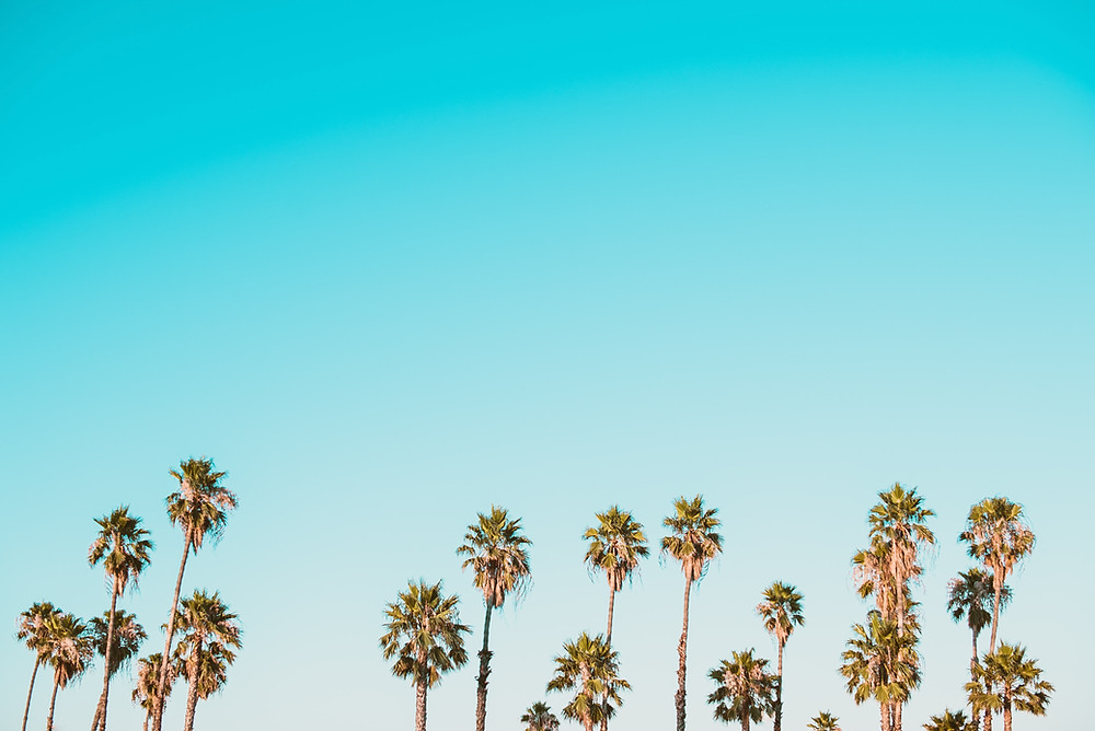palm trees against blue sky background