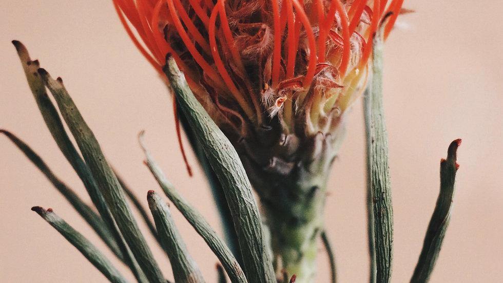 Australian Bush Flower Essences Kit (69 essences)