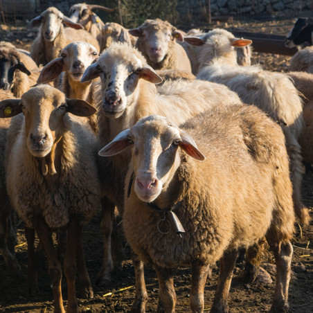 MSS On Point: I Don't Follow the Herd Mentality