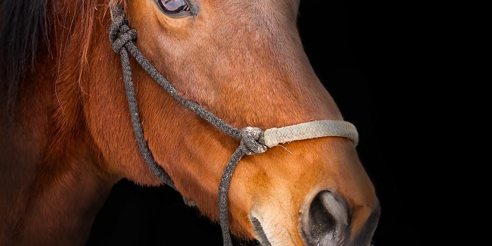 Klangtherapie für Pferde