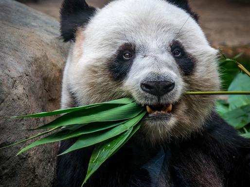 Panda Den / Keeper Experience