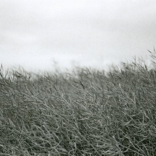 WEERBERICHT: Fris met kans op winterse buien