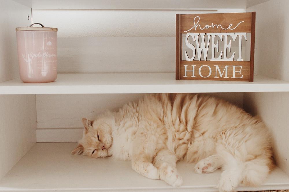Katt sover i ryddig hylle