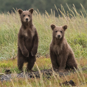 Bears in the Area (as usual), keep your garbage secured.