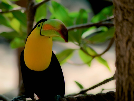 10 animals found in Brazil